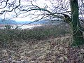 Patch of woodland by Yorkley Lane, south of Yorkley - geograph.org.uk - 1672253.jpg