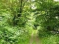 Path inside Bunny Old Wood - geograph.org.uk - 1335530.jpg