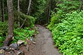 Path to the lower observation point for Narada Falls, Mount Rainier National Park 02.jpg