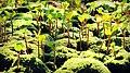 Pequeño bosque - little forest - panoramio.jpg