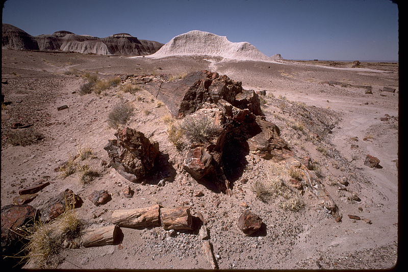 petrified forest natl pk latin dating site A century of research at petrified forest national park: cultural and natural history55 sion is rapid because.