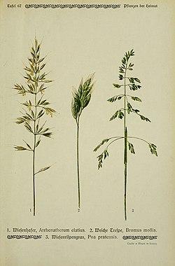 Pflanzen der Heimat (Tafel 67) (6099931534).jpg