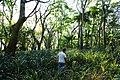 Piña bajo sombra - 49465438006.jpg
