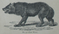 Picture Natural History - No 4 - The Wolf.png