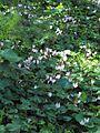 PikiWiki Israel 19065 Plants of Israel.jpg