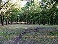 Piknik Alanı... - panoramio (1).jpg