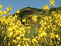 Pineta (vulcano) - panoramio.jpg