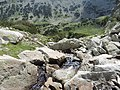 Pirin National Park 45.JPG