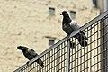 Place T10 (Paris), pigeons 02.jpg