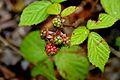Plant, Jodrell Bank 2.jpg
