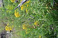 Plants OB 293 (24016281467).jpg