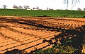 Ploughed field near Guildtown - geograph.org.uk - 9354.jpg