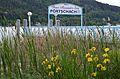 Poertschach Halbinselpromenade Sumpf-Schwertlilie am Landesteg 27052013 488.jpg