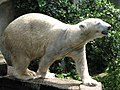 Polary bear drying off (540200457).jpg