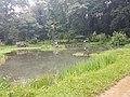 Pond View 20170706 160332.jpg