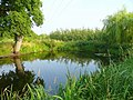 Pond by the B4224 - geograph.org.uk - 899474.jpg