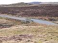 Pont-ar-Gonwy - geograph.org.uk - 1173444.jpg