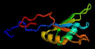 RBM9 protein-coding gene in the species Homo sapiens