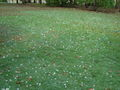 Queensland HailStorm 260305.JPG