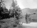 Queensland State Archives 1933 Scene on Upper Currumbin Creek c 1934.png