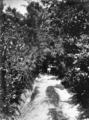 Queensland State Archives 228 Bush land between Eumundi and Noosa Heads c 1931.png