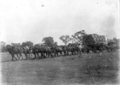 Queensland State Archives 3160 T Snows draught horse team c 1910.png