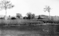 Queensland State Archives 4158 Field of maize Imbil Mary Valley District c 1930.png