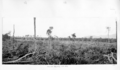Queensland State Archives 4940 Panorama of Maalan Country North Queensland 1953.png