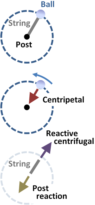 Reactive centrifugal force - A ball in circular motion held by a string tied to a fixed post.