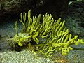 Reef2176 - Flickr - NOAA Photo Library.jpg