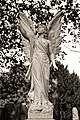 Reeves family grave angel City of London Cemetery monument 4 DXO FilmPack Ilford XP2 Expresso.jpg