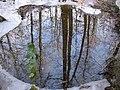 Reflets dans la foret de Masevaux - panoramio.jpg