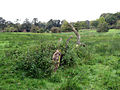 Remains of a tree - geograph.org.uk - 1012445.jpg