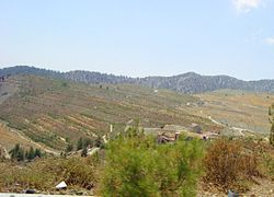 Replantation of old mines in Amiantos village in Troodos Republic of Cyprus.jpg