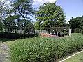 Rheinpark-Köln-g-Lauben-am-Rosengarten-102.JPG