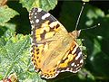 Ribble Link Butterfly5.jpeg