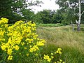 Richmond Park - geograph.org.uk - 507362.jpg