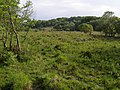 Ridley Bottom from Ridley Wood, New Forest - geograph.org.uk - 433225.jpg