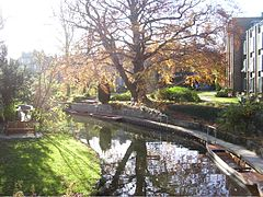 River Cam running through Darwin College, Cambridge.JPG