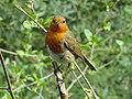 Robin at Stover.jpg