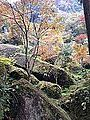 "Rocks with moss and red leaves in ""Auberge Kaedenoki"" in Shin-Yabakei Valley.jpg"