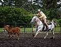 Rodeo Event Calf Roping 21.jpg