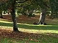 Roller at Cockington - geograph.org.uk - 1561611.jpg