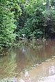 Roman Forest Flood, 4-19-16 at 2-30 PM (25924220454).jpg