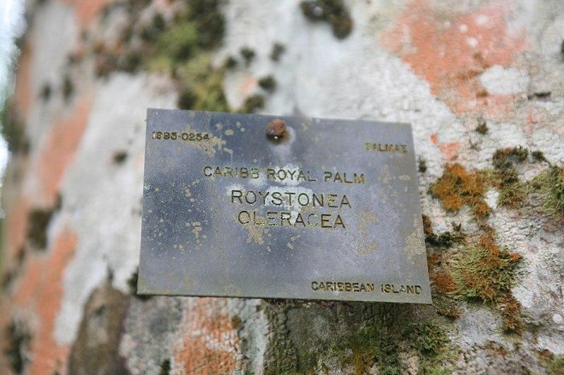 File:Roystonea Oleracea - Plaque.jpg