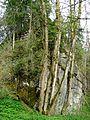 Ruine Baltenstein GO-2.jpg