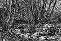 Ruisseau du Vialais 02.jpg