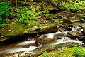 Rushing-water-creek - West Virginia - ForestWander.jpg