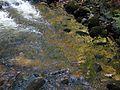 Rzeka Szklarka poniżej wodospadu.JPG