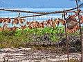 Séchage du poisson, cote Est sud de Nosy Be, Madagascar (25813485840).jpg